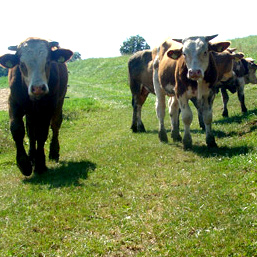 Kmetija Pahole